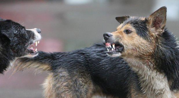 Haita de câini a atacat o femeie!