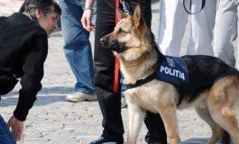 Evadat periculos, prins lângă Berzovia! Oamenii legii, cu un câine poliţist, îl caută pe al doilea evadat.