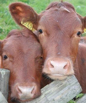 Subvențiile APIA-din 2018 doar pentru fermierii ,,fiscalizați ,,