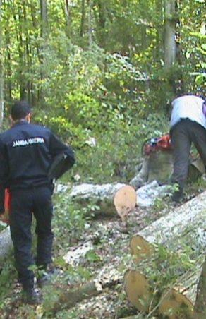 Hoti de lemne surprinşi în flagrant de jandarmi.