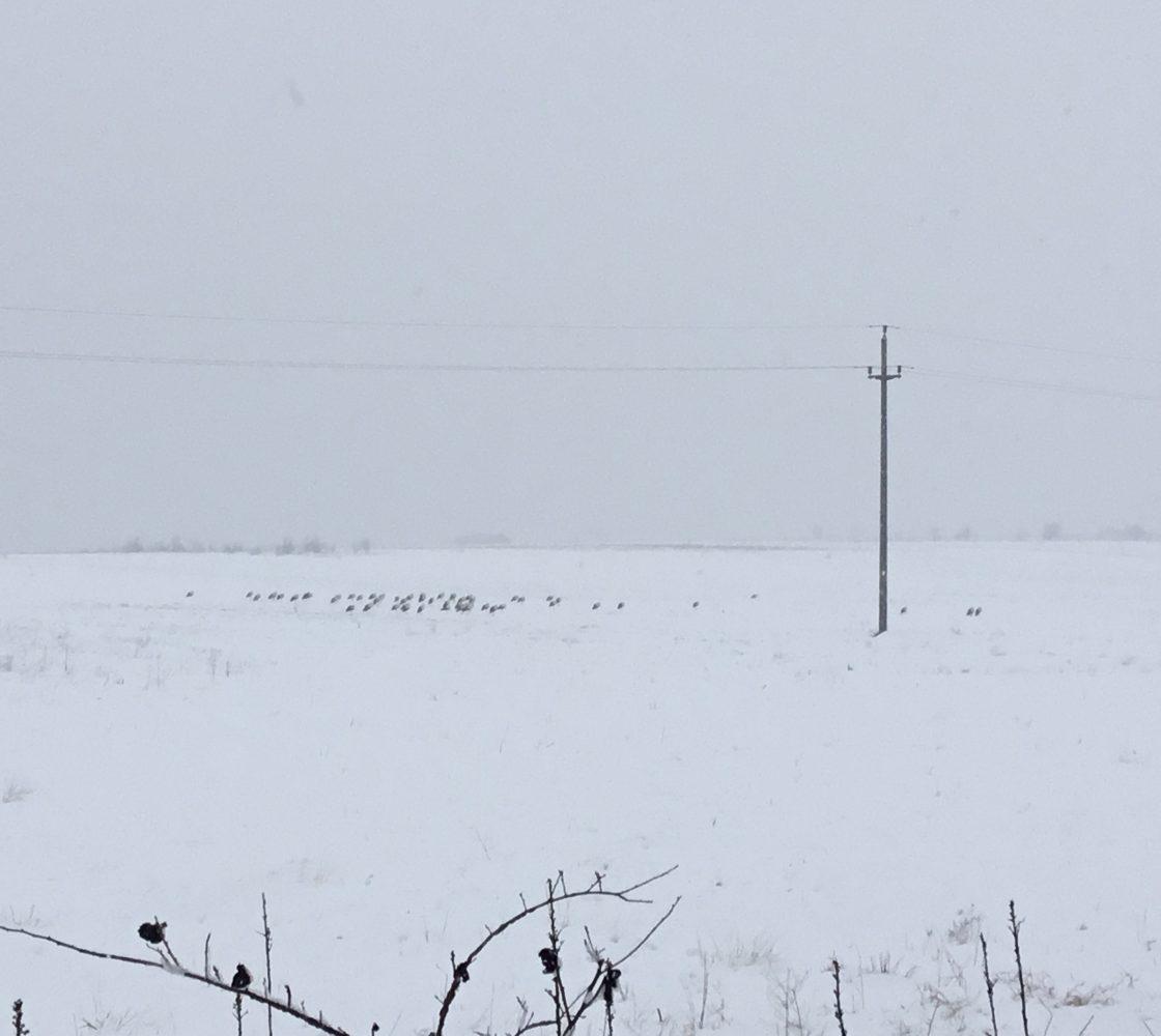 """Berzele trebuie """"să îndure"""" și să aștepte topirea zăpezii…cel puțin deocamdată!"""