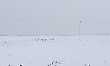 """Berzele trebuie """"să îndure"""" și să aștepte topirea zăpezii...cel puțin deocamdată!"""