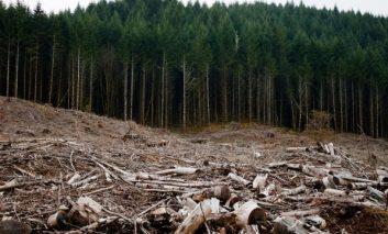 Romsilva contraataca:Padurile din Parcul National Semenic -Cheile Carasului sunt taiate ca la carte!